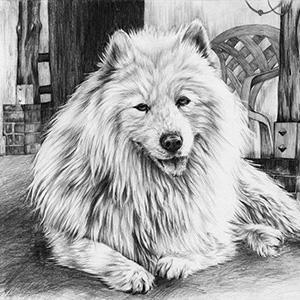 jak-narysowac-psa