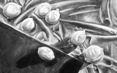 rysunek węglem i kredą, martwa natura z cytryn, przygotowanie teczki na asp, jak narysować realistyczną martwą naturę