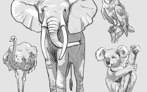 photoshop szkice zwierzat